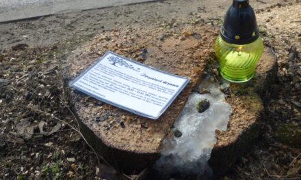 Ekolodzy pożegnali wycięte drzewa i chcą wyjaśnień (FILM)
