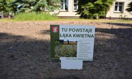 Grabów: Ruszyła akcja promocji łąk kwietnych