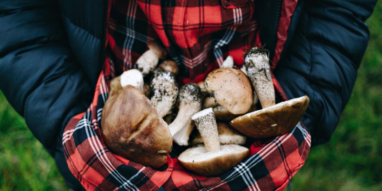 Zatrucia grzybami – objawy i zapobieganie